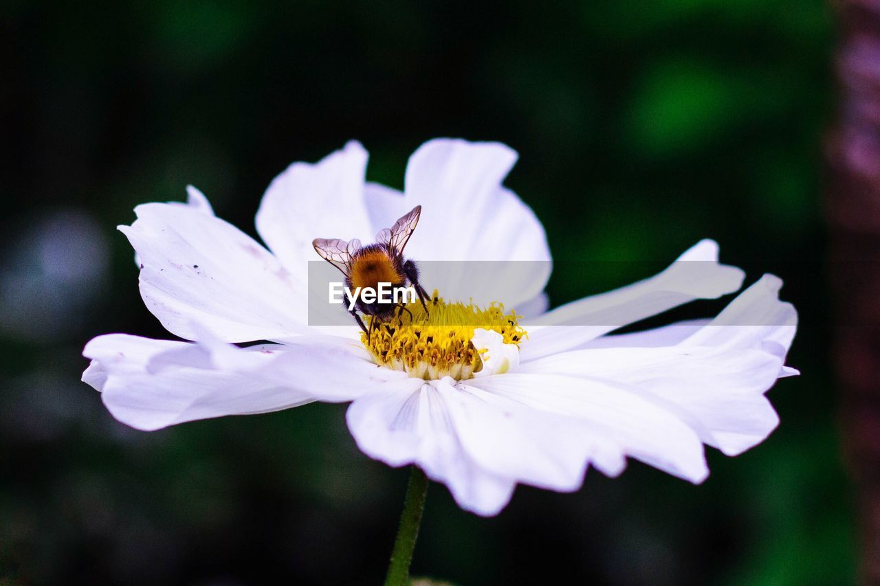flowering plant, flower, petal, beauty in nature, freshness, flower head, fragility, invertebrate, insect, animals in the wild, plant, animal wildlife, vulnerability, one animal, animal themes, growth, bee, animal, inflorescence, close-up, pollen, pollination, no people