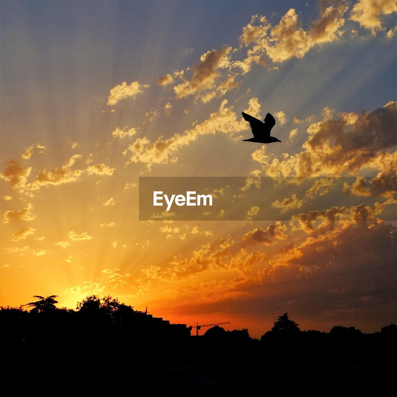 sunset, silhouette, sky, vertebrate, one animal, animal themes, animal, cloud - sky, orange color, animals in the wild, flying, bird, animal wildlife, beauty in nature, tree, low angle view, scenics - nature, no people, plant, nature, outdoors
