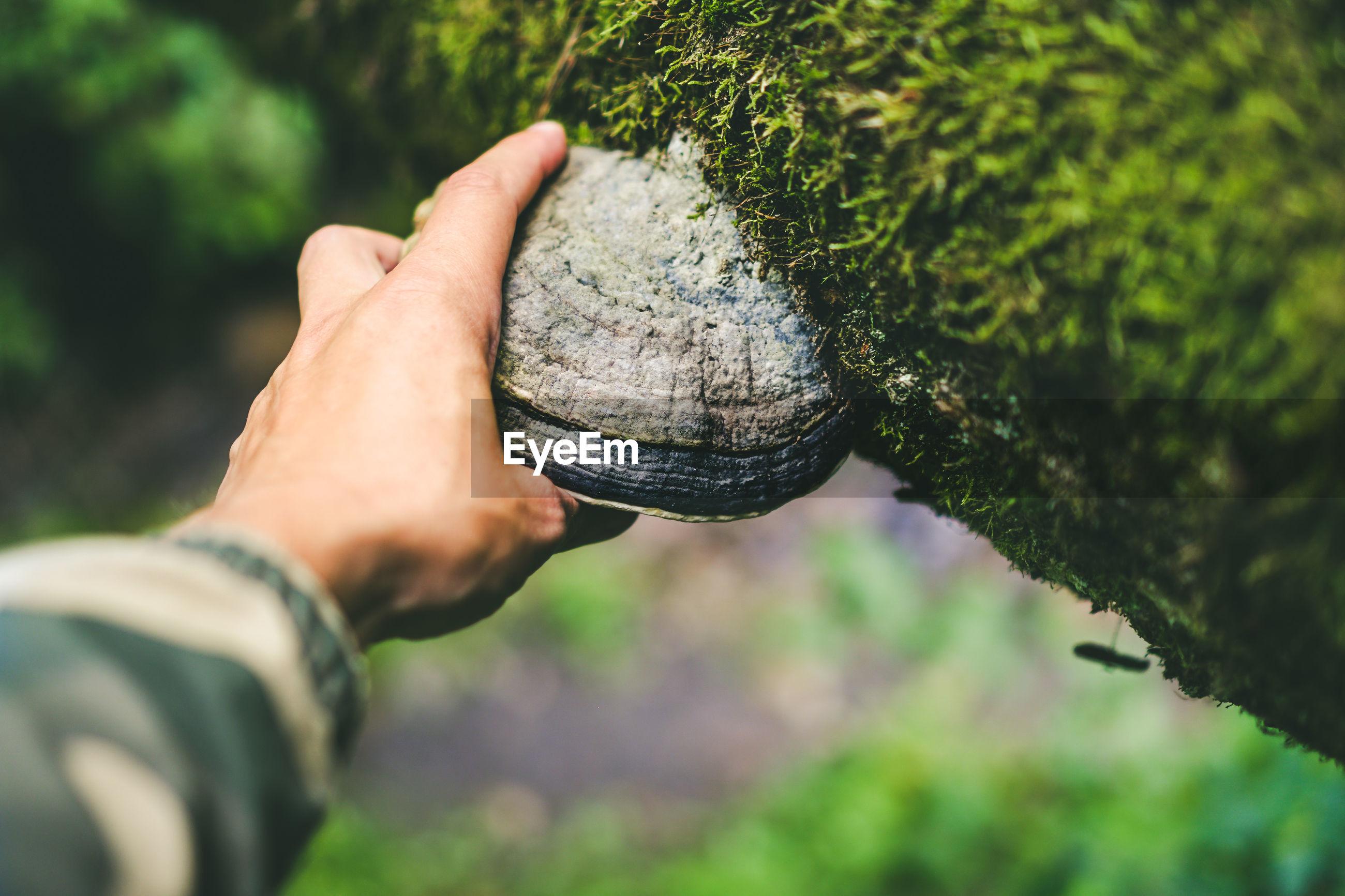 Cropped hand holding mushroom on tree trunk