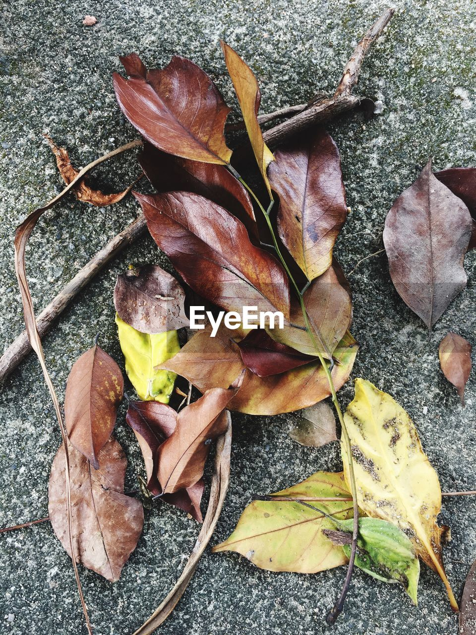 leaf, autumn, change, dry, high angle view, fallen, day, maple, no people, nature, outdoors, close-up, fragility, maple leaf, beauty in nature