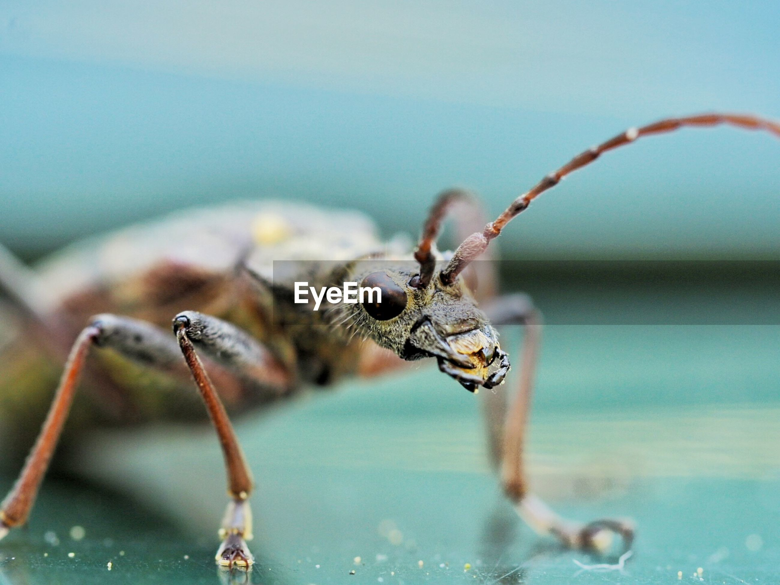 Extreme close-up of insect on table