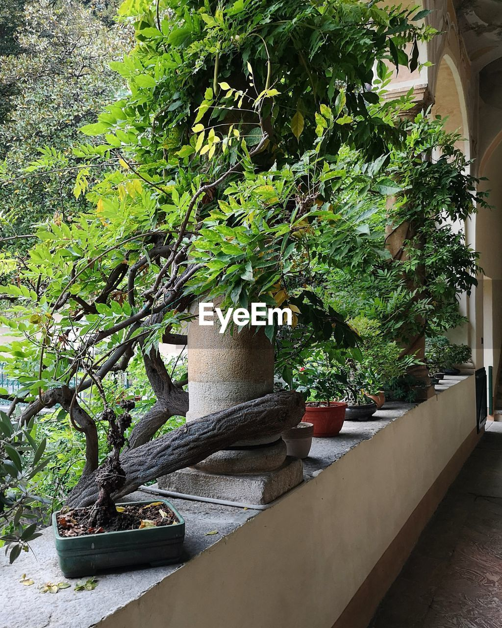 plant, growth, tree, nature, potted plant, no people, green color, day, outdoors, plant part, beauty in nature, leaf, architecture, front or back yard, bonsai tree, built structure, tranquility, close-up, decoration, flower pot, houseplant