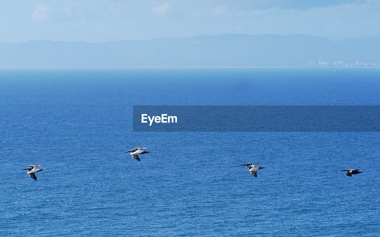 Side view of pelicans flying over sea against sky