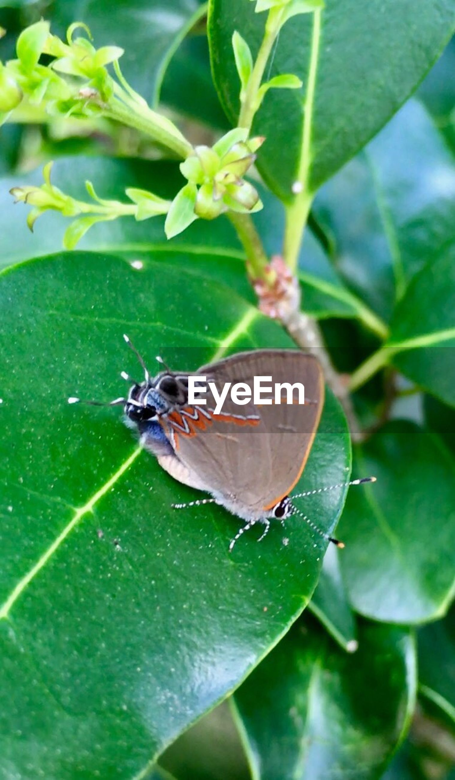 insect, leaf, animal themes, animals in the wild, one animal, wildlife, green color, nature, plant, animal wildlife, no people, outdoors, close-up, day, beauty in nature, butterfly - insect, growth, fragility, freshness