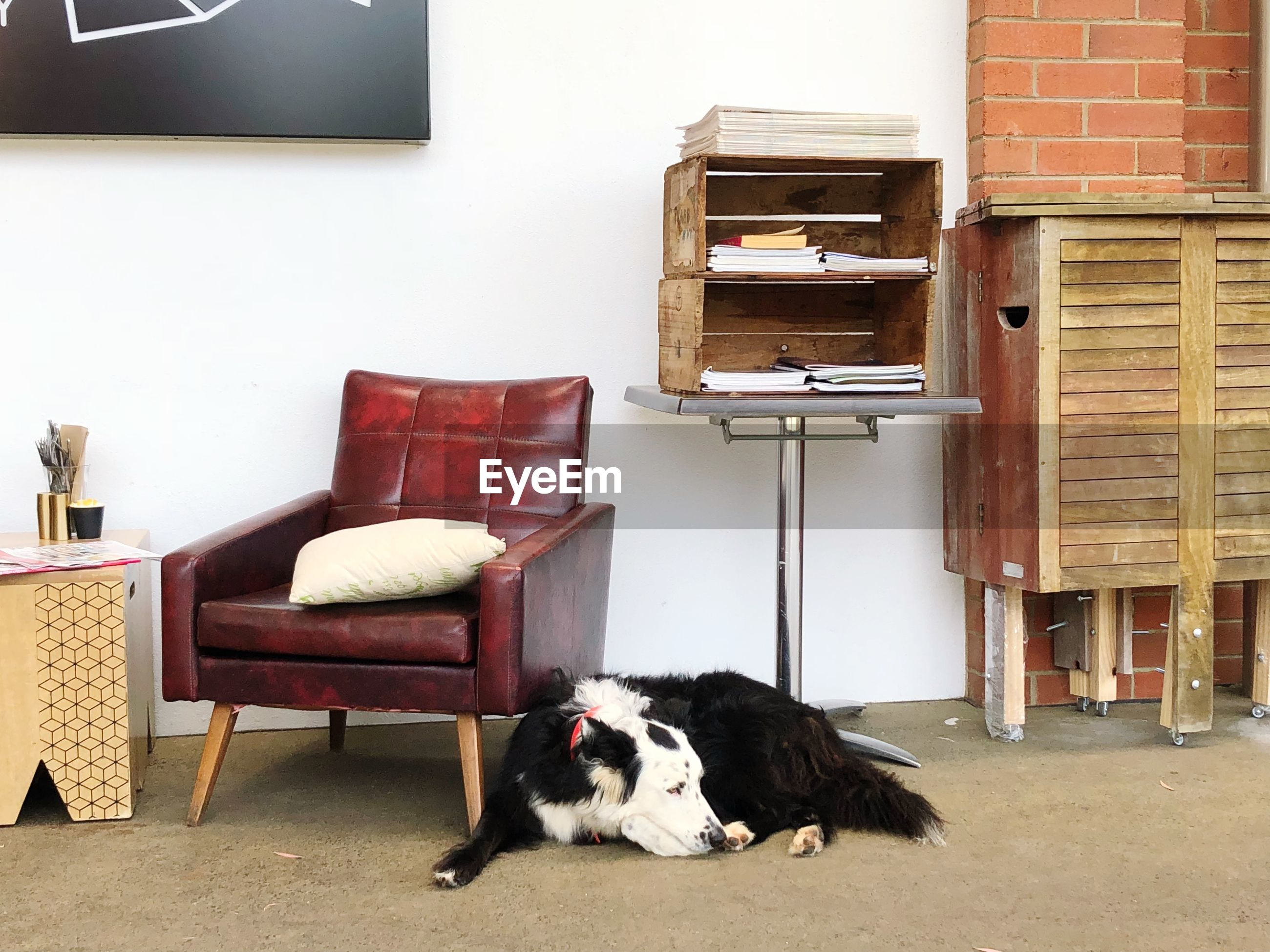 pets, domestic, mammal, domestic animals, chair, one animal, animal themes, seat, animal, relaxation, vertebrate, indoors, no people, home interior, domestic room, furniture, comfortable, resting, sofa, dog, flooring, border collie