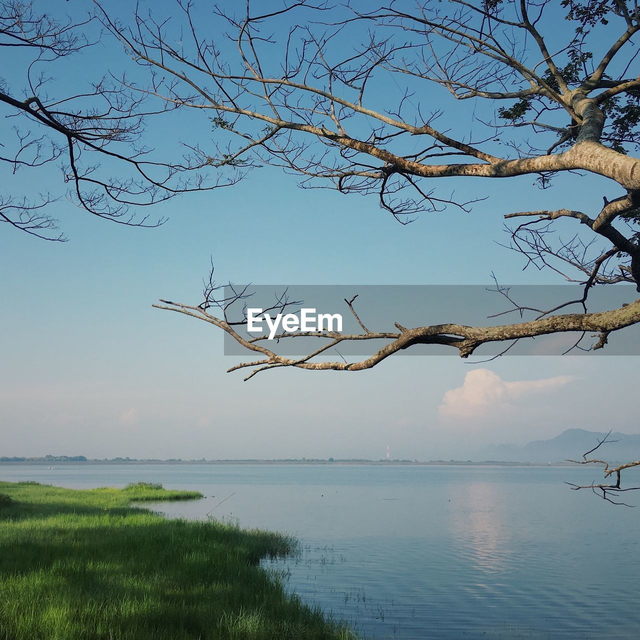 tree, water, sky, tranquility, plant, scenics - nature, bare tree, tranquil scene, branch, beauty in nature, nature, no people, lake, non-urban scene, day, outdoors, land, grass, idyllic