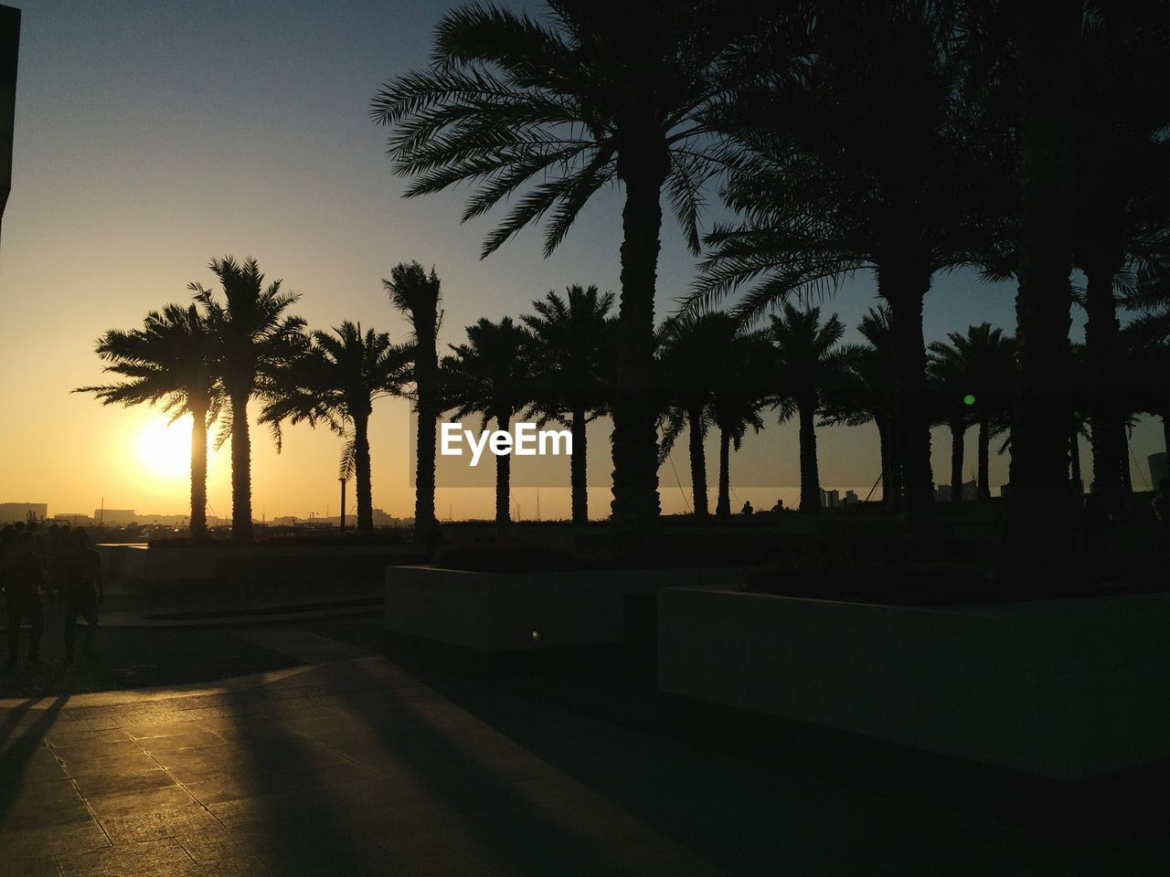 tree, palm tree, sunset, silhouette, growth, nature, outdoors, sky, no people, beauty in nature, day