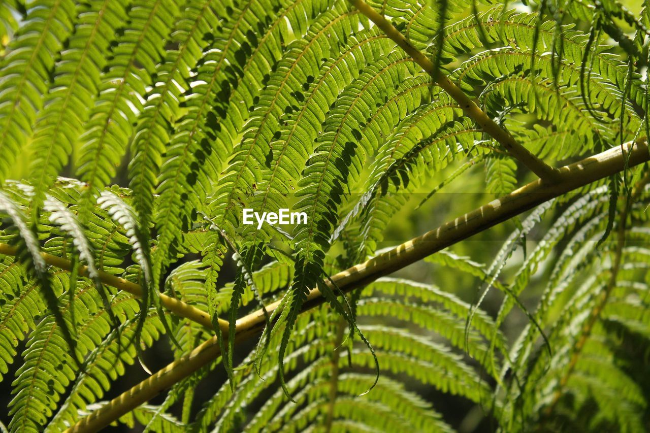 green color, leaf, growth, nature, plant, close-up, no people, day, beauty in nature, outdoors, freshness