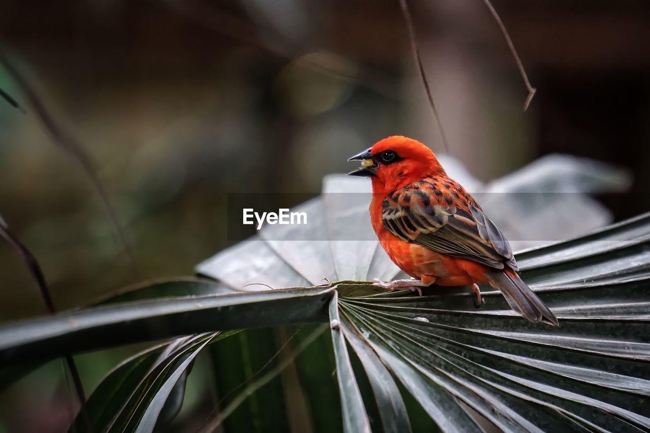 Orange Bird Perching On Tree