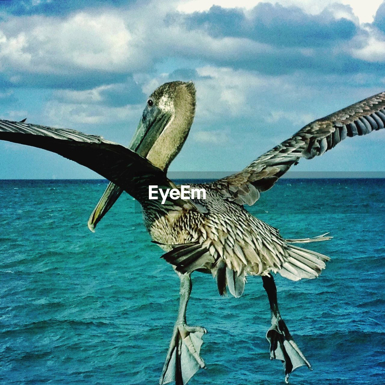 View of bird flying over sea