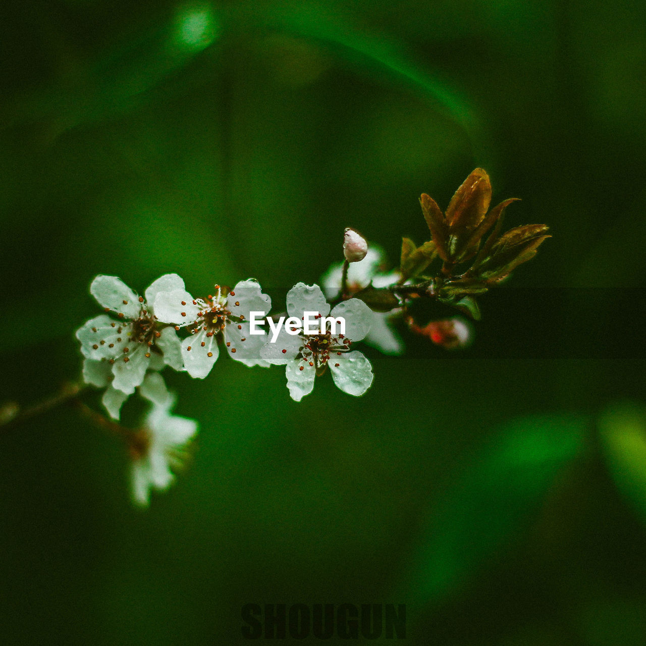 flower, nature, fragility, beauty in nature, growth, blossom, no people, freshness, petal, springtime, close-up, outdoors, plant, day, branch, flower head, tree, blooming