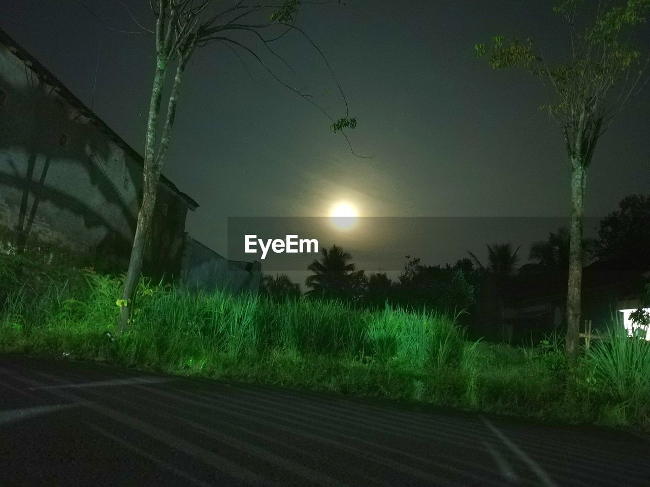 night, moon, tree, nature, grass, no people, beauty in nature, scenics, outdoors, plant, tranquility, illuminated, tranquil scene, growth, the way forward, field, sky, road, landscape