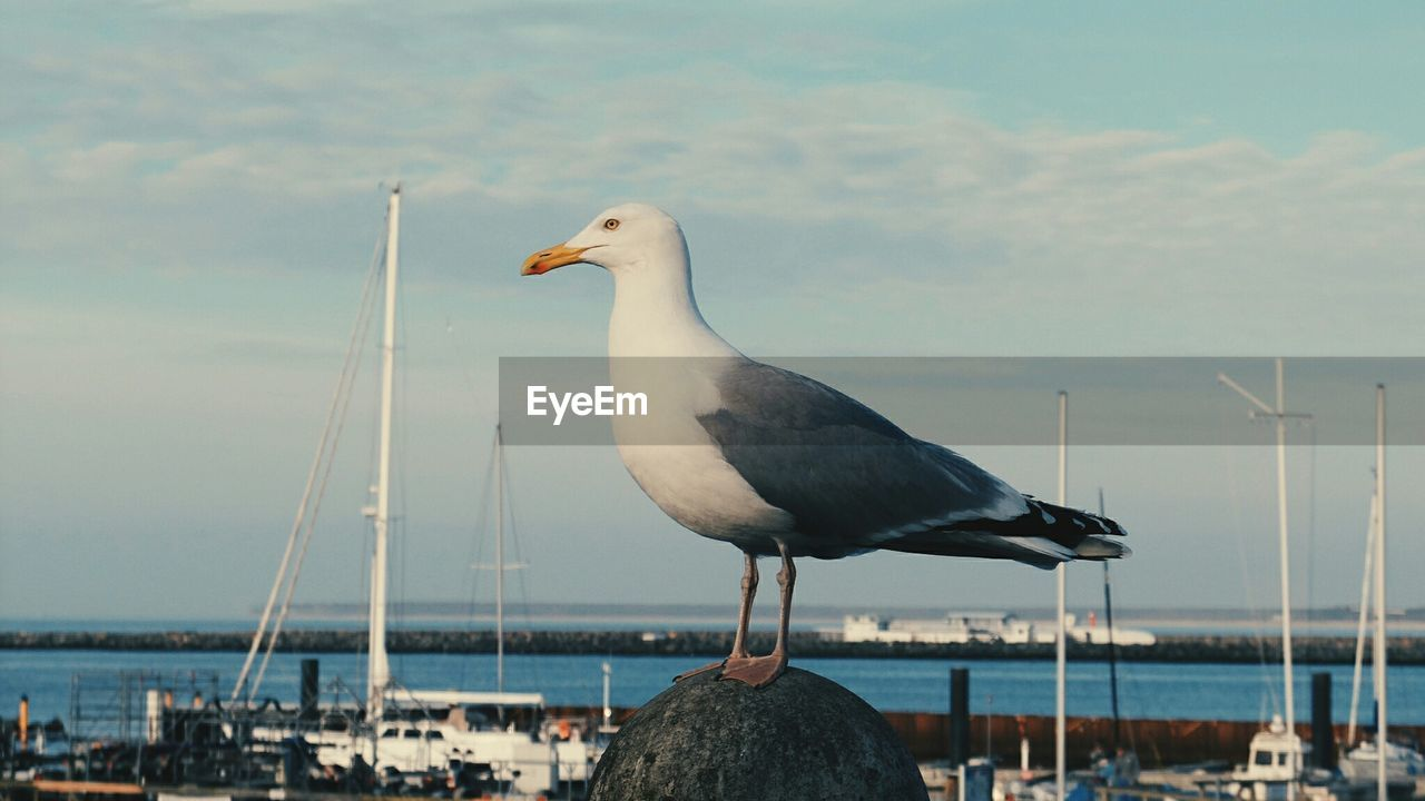 Seagull Perching On Bollard By Harbor Against Sky