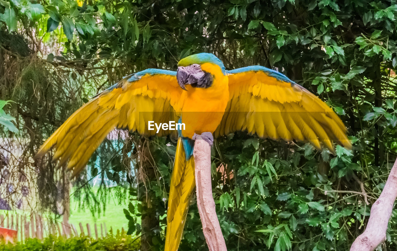 yellow, plant, animal wildlife, animals in the wild, bird, animal themes, animal, one animal, vertebrate, nature, perching, tree, growth, parrot, day, macaw, no people, beauty in nature, outdoors, close-up