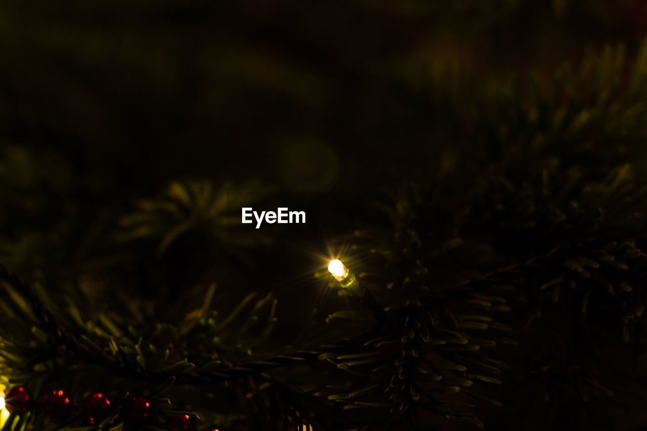 plant, christmas, selective focus, tree, christmas decoration, no people, close-up, illuminated, nature, christmas tree, night, celebration, holiday, leaf, decoration, outdoors, plant part, christmas ornament, green color, tranquility, pine tree, needle - plant part, coniferous tree, fir tree
