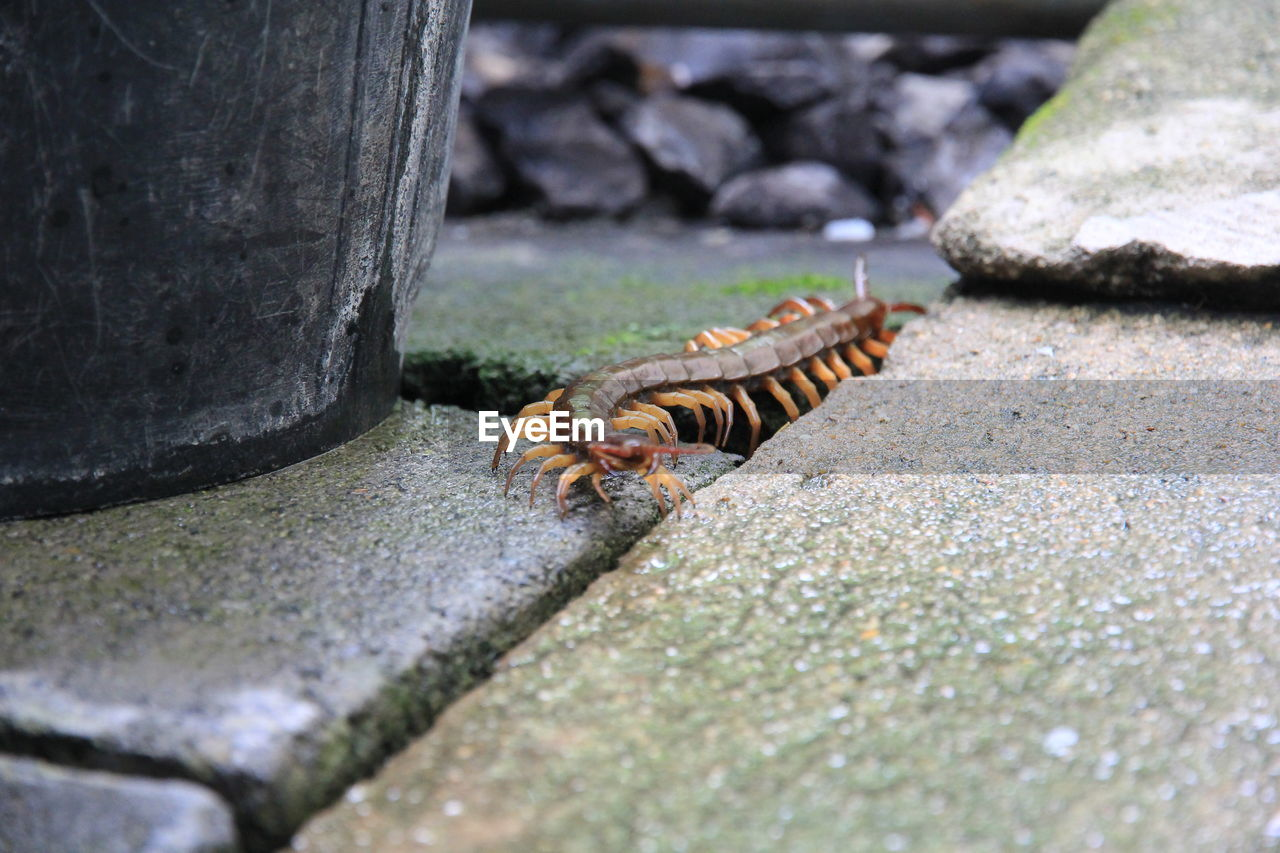 Close-up of insect on footpath