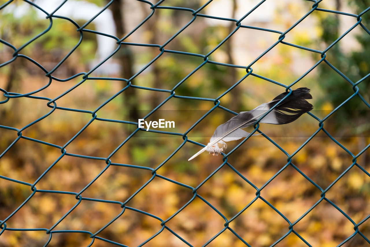 Close-Up Of Feather On Chainlink Fence