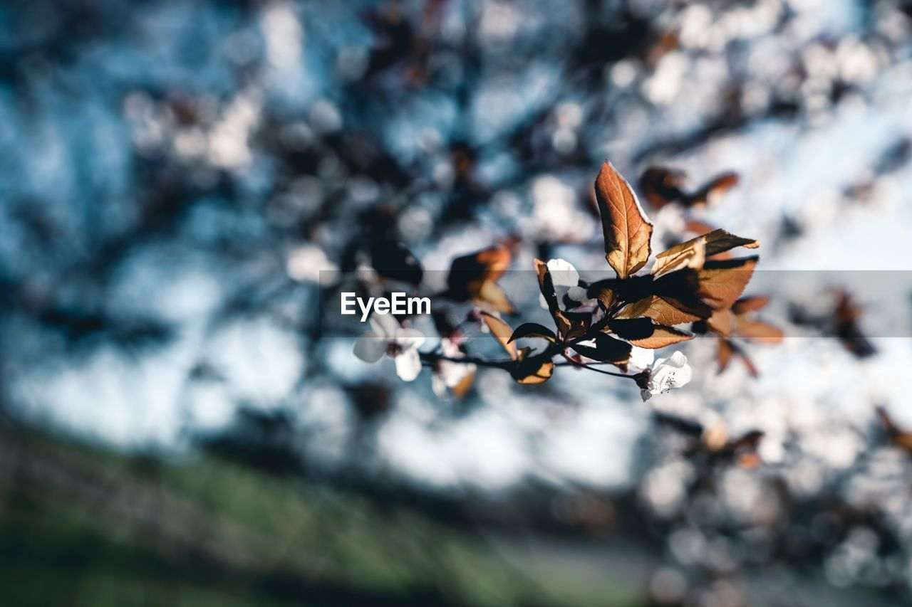 beauty in nature, day, no people, close-up, focus on foreground, nature, plant, selective focus, leaf, fragility, vulnerability, plant part, growth, dry, outdoors, autumn, sunlight, land, tree, freshness, leaves