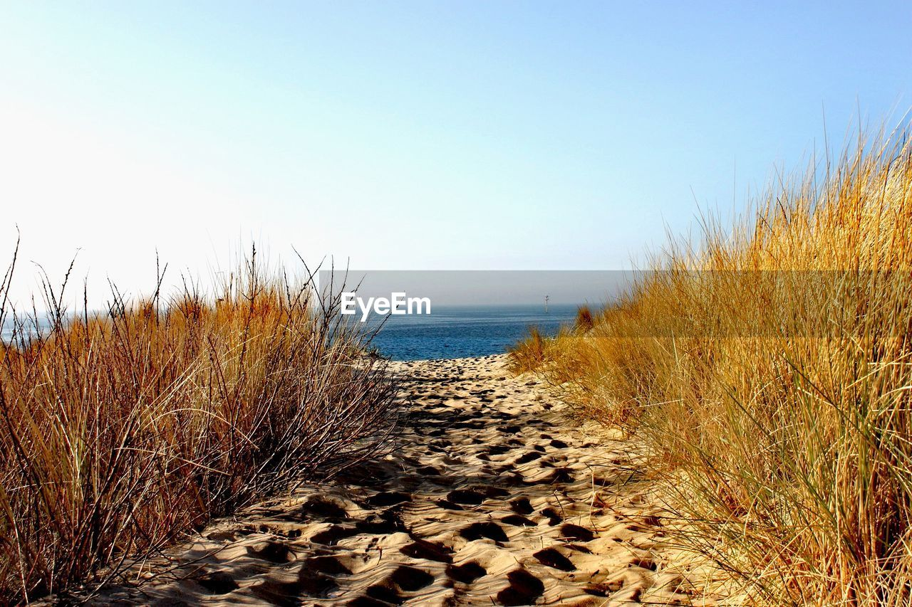sky, water, land, sea, tranquility, beach, tranquil scene, beauty in nature, nature, sand, scenics - nature, clear sky, no people, plant, horizon over water, horizon, day, non-urban scene, grass, outdoors, marram grass
