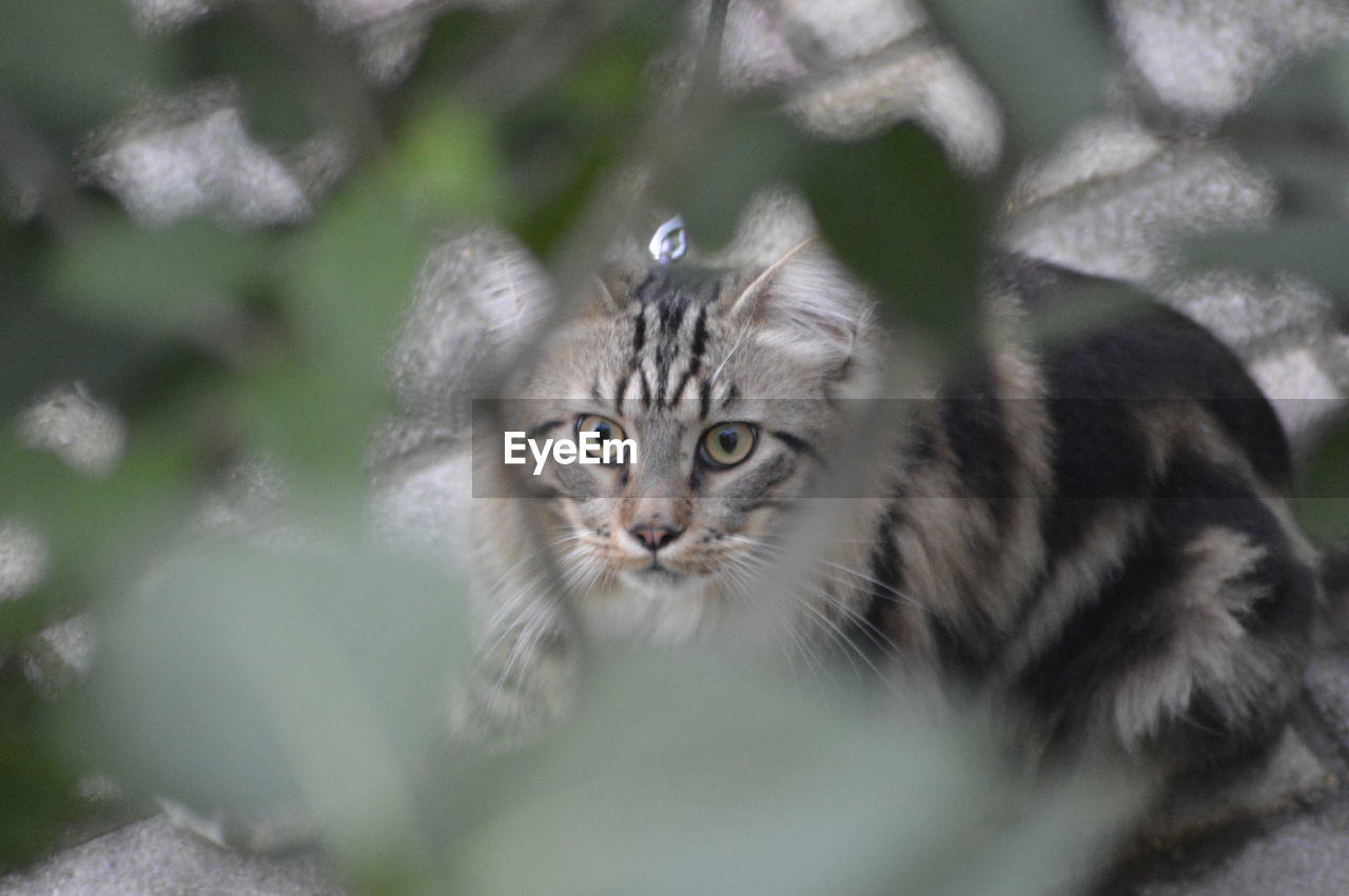 one animal, mammal, portrait, looking at camera, vertebrate, domestic animals, feline, pets, cat, domestic, selective focus, domestic cat, no people, day, plant, animals in the wild, animal wildlife, whisker, animal eye