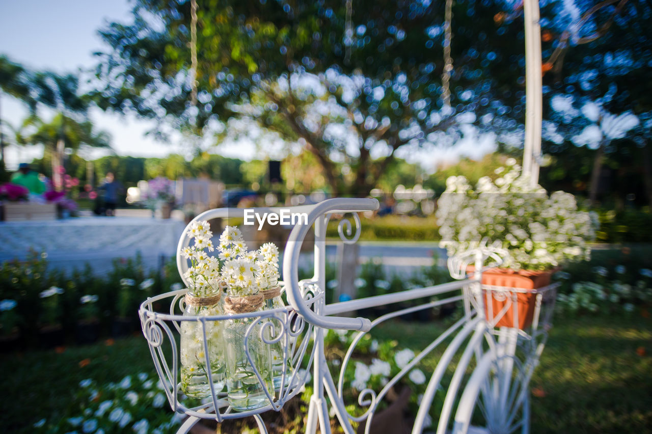 focus on foreground, plant, day, nature, flowering plant, close-up, flower, no people, outdoors, glass, freshness, park - man made space, park, tree, metal, fragility, transparent, drinking glass, selective focus, table