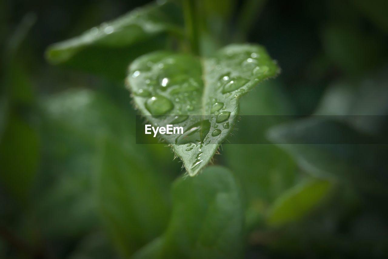drop, nature, green color, leaf, beauty in nature, water, plant, close-up, freshness, growth, weather, fragility, wet, no people, raindrop, outdoors, day, cold temperature, winter