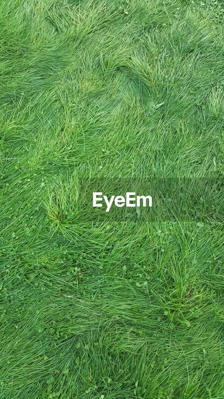 backgrounds, full frame, nature, green color, grass, no people, day, close-up, outdoors