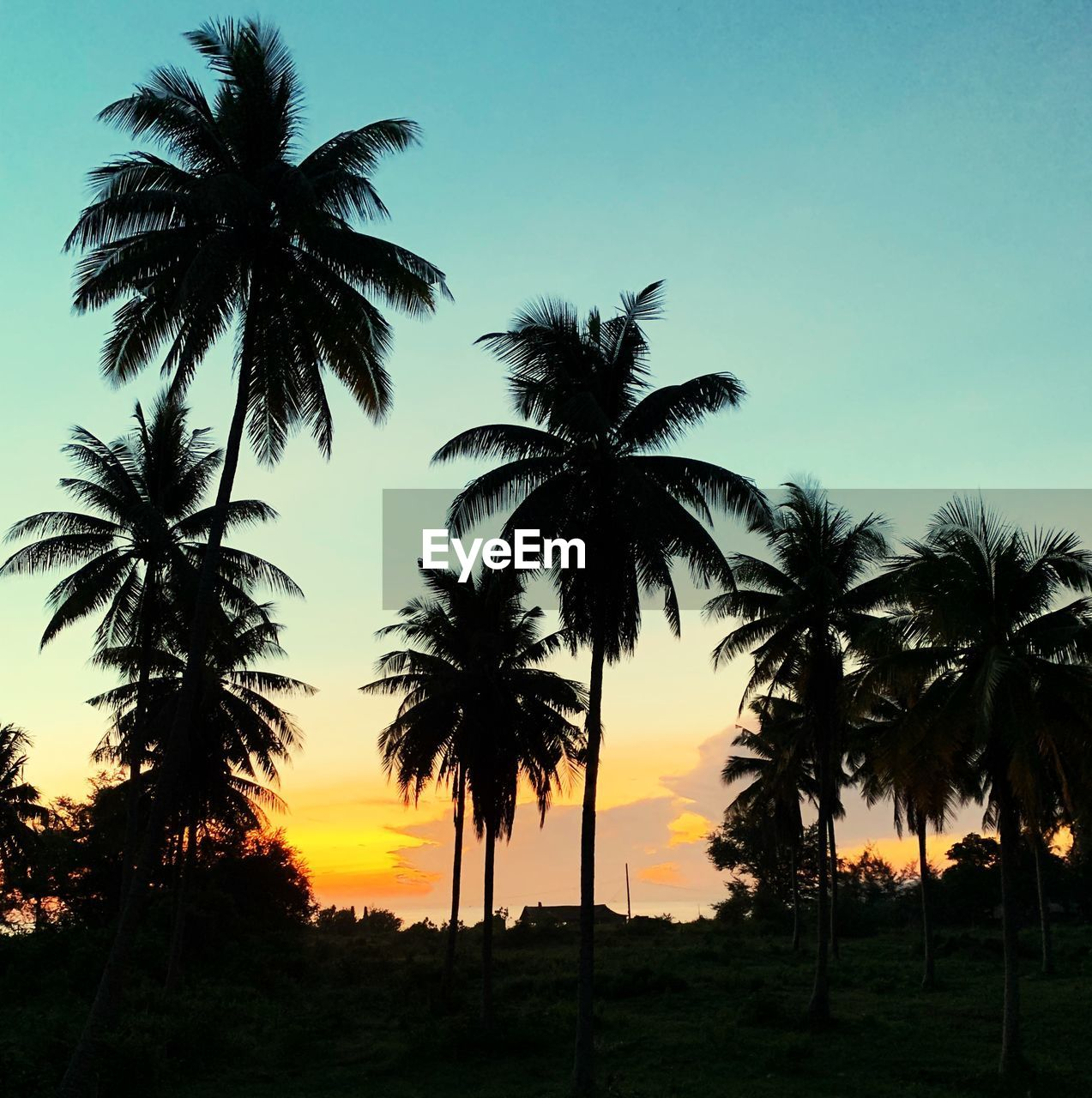 palm tree, tropical climate, sky, tree, sunset, plant, silhouette, beauty in nature, tranquil scene, scenics - nature, tranquility, growth, nature, no people, orange color, outdoors, coconut palm tree, land, non-urban scene, clear sky, tropical tree
