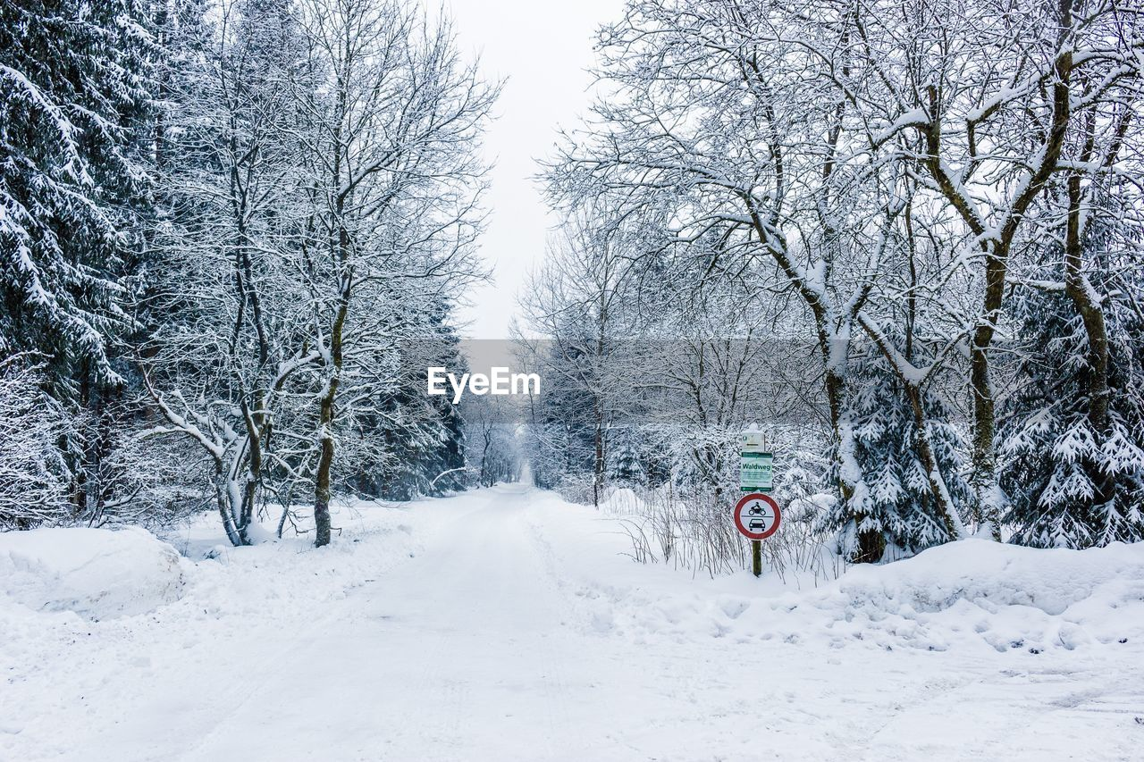 winter, snow, transportation, nature, cold temperature, the way forward, bare tree, beauty in nature, road, scenics, tranquility, no people, day, tree, outdoors