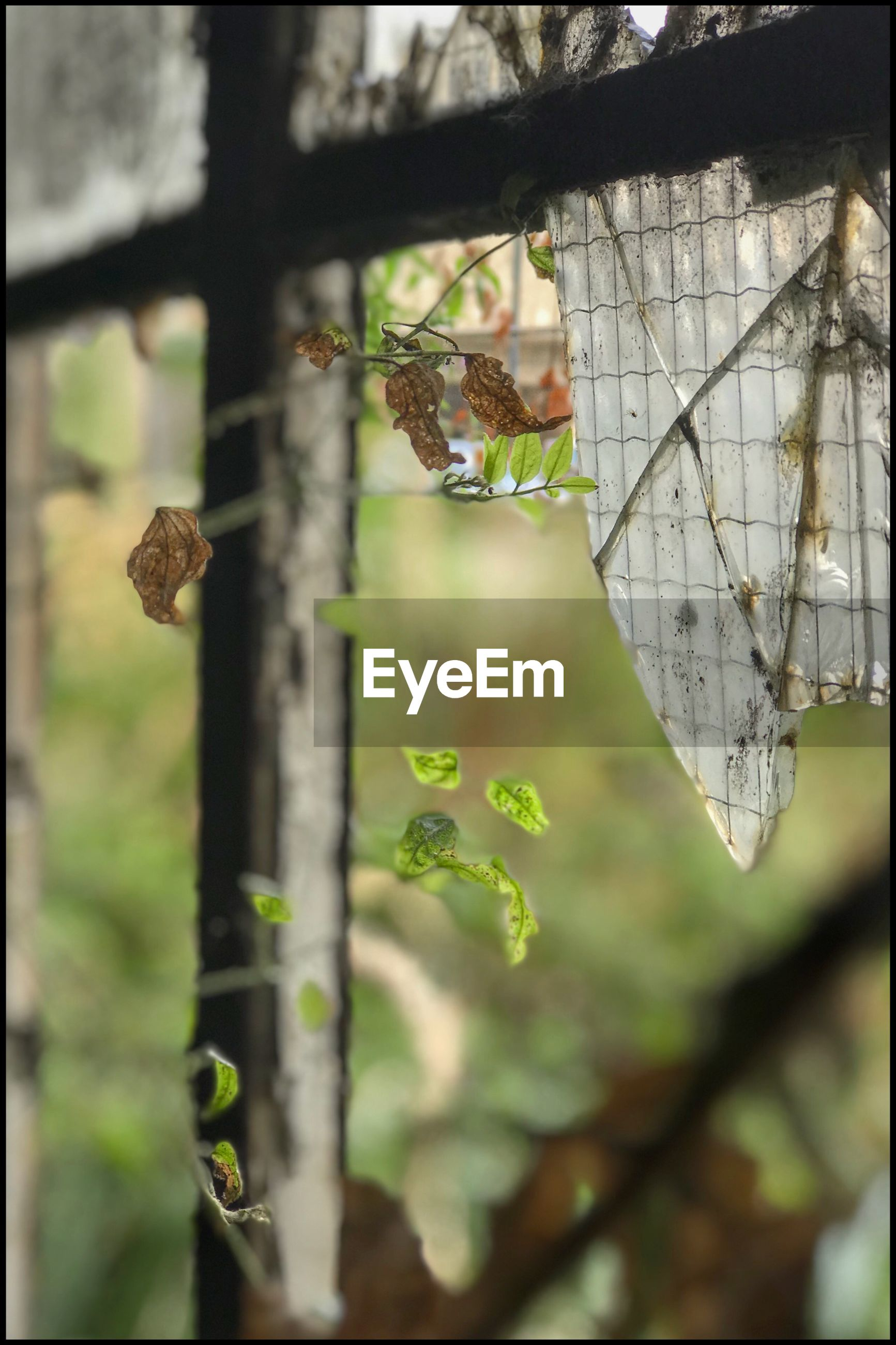 focus on foreground, plant, day, no people, animal, close-up, animals in the wild, animal wildlife, nature, animal themes, outdoors, leaf, tree, plant part, one animal, hanging, growth, flying, invertebrate, mid-air, butterfly - insect