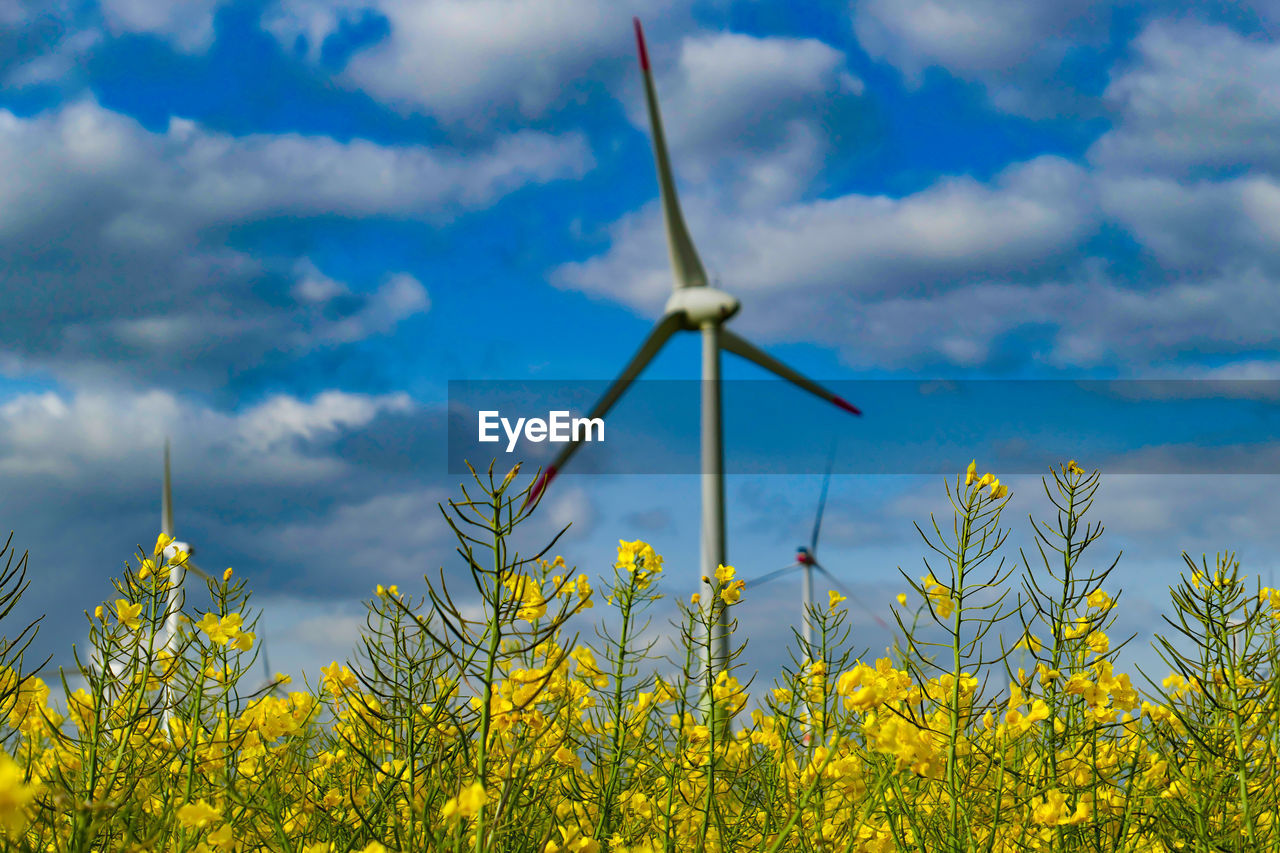 wind turbine, renewable energy, fuel and power generation, alternative energy, turbine, environmental conservation, sky, yellow, wind power, cloud - sky, plant, environment, growth, nature, flower, agriculture, rural scene, beauty in nature, flowering plant, landscape, no people, outdoors, sustainable resources