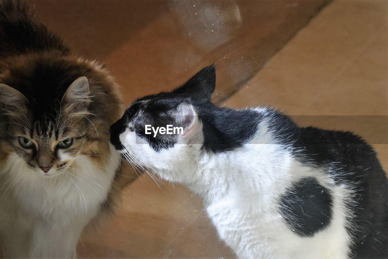 PORTRAIT OF CAT SITTING