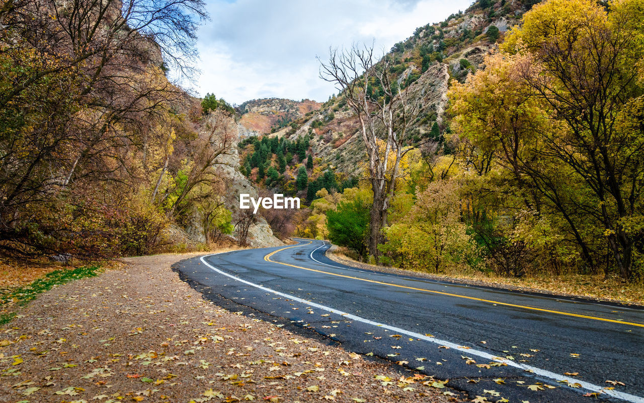 tree, road, transportation, plant, the way forward, mountain, nature, day, no people, sky, direction, scenics - nature, beauty in nature, tranquility, autumn, non-urban scene, tranquil scene, empty road, symbol, road marking, outdoors, change