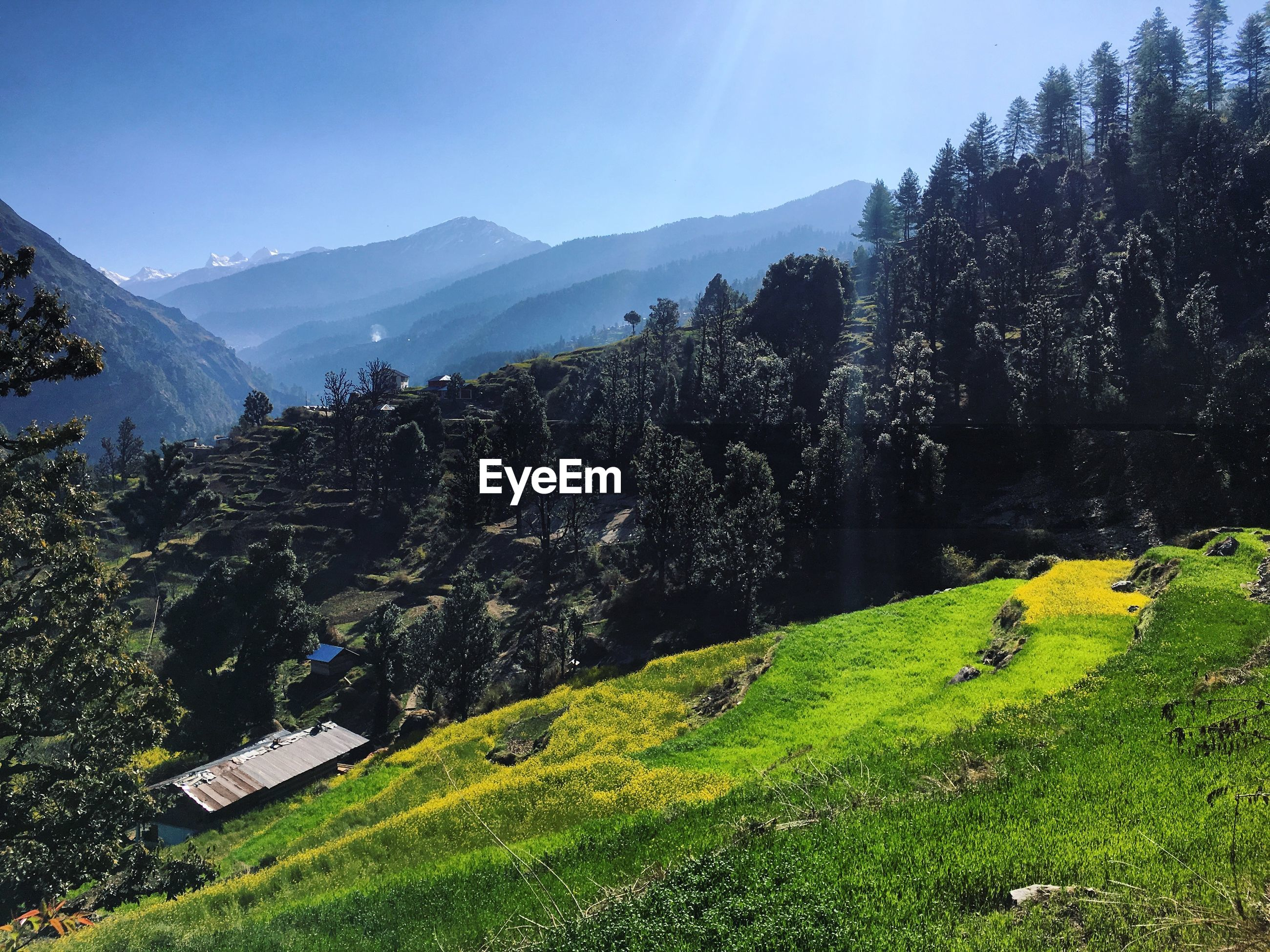 Scenic view of landscape during sunny day