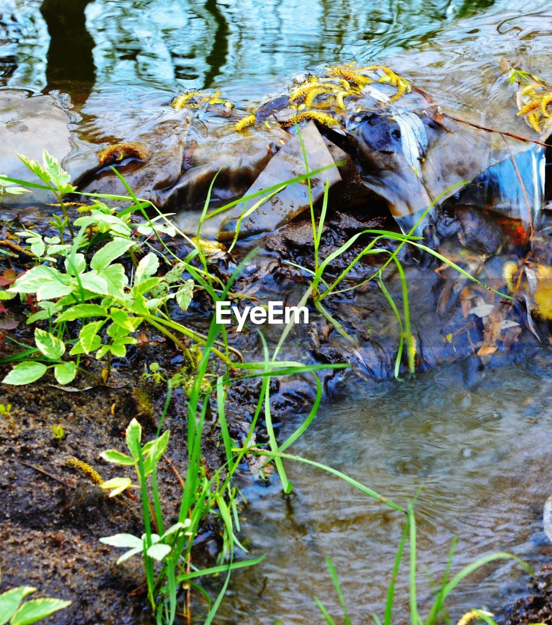 water, outdoors, leaf, river, nature, day, animal themes, no people, one animal, animals in the wild, reptile, close-up, beauty in nature, mammal