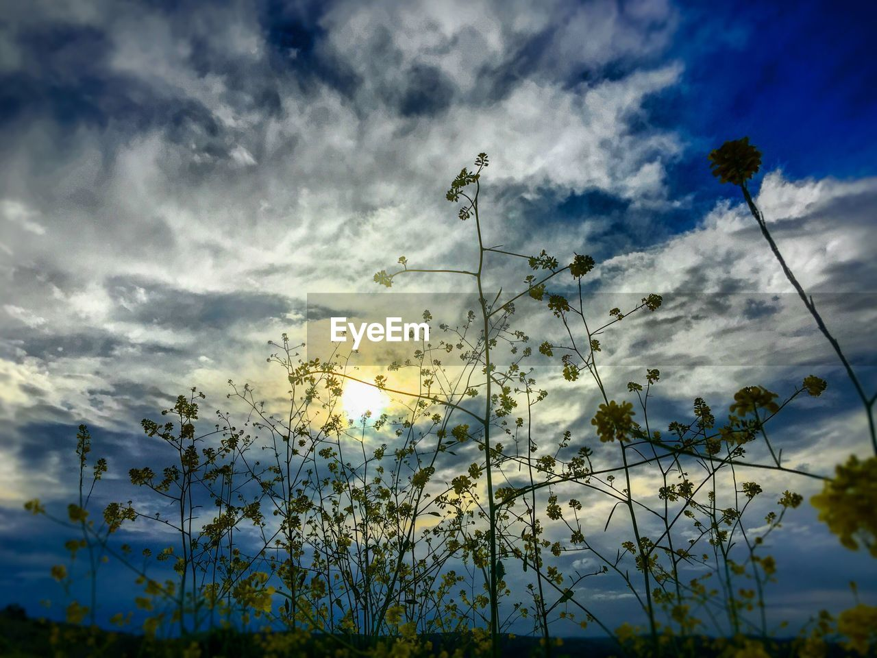 nature, sky, cloud - sky, plant, beauty in nature, growth, flower, no people, outdoors, low angle view, sunset, tree, fragility, day, scenics, freshness, flower head