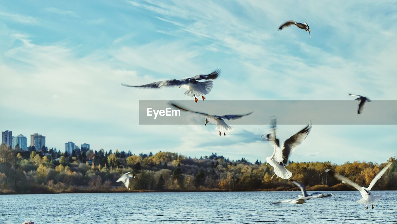 flying, bird, animal themes, animals in the wild, spread wings, mid-air, water, animal wildlife, nature, day, motion, seagull, no people, lake, outdoors, beauty in nature, sky
