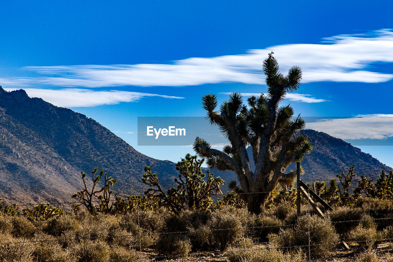 sky, scenics - nature, tranquil scene, mountain, beauty in nature, plant, tranquility, non-urban scene, cloud - sky, environment, landscape, tree, no people, growth, blue, nature, remote, day, mountain range, land, arid climate, outdoors, climate, semi-arid