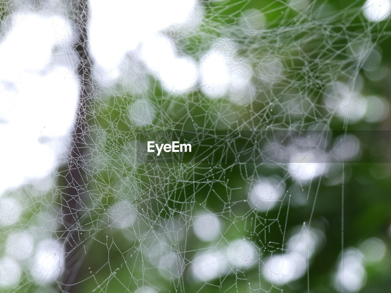 fragility, plant, vulnerability, spider web, close-up, no people, growth, nature, beauty in nature, day, focus on foreground, selective focus, complexity, outdoors, tranquility, green color, natural pattern, sunlight, full frame, pattern, softness
