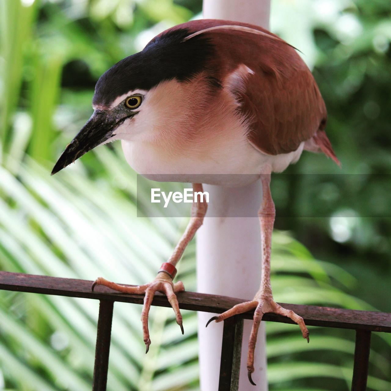 bird, one animal, animals in the wild, animal themes, focus on foreground, beak, animal wildlife, day, perching, no people, close-up, nature, outdoors