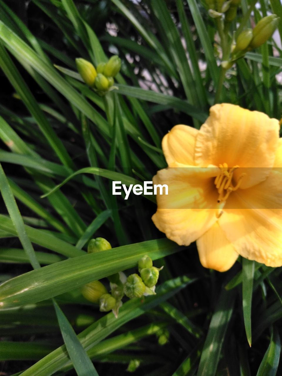 plant, flowering plant, growth, beauty in nature, flower, freshness, fragility, flower head, inflorescence, vulnerability, petal, close-up, yellow, green color, nature, day, plant part, leaf, no people, focus on foreground, pollen