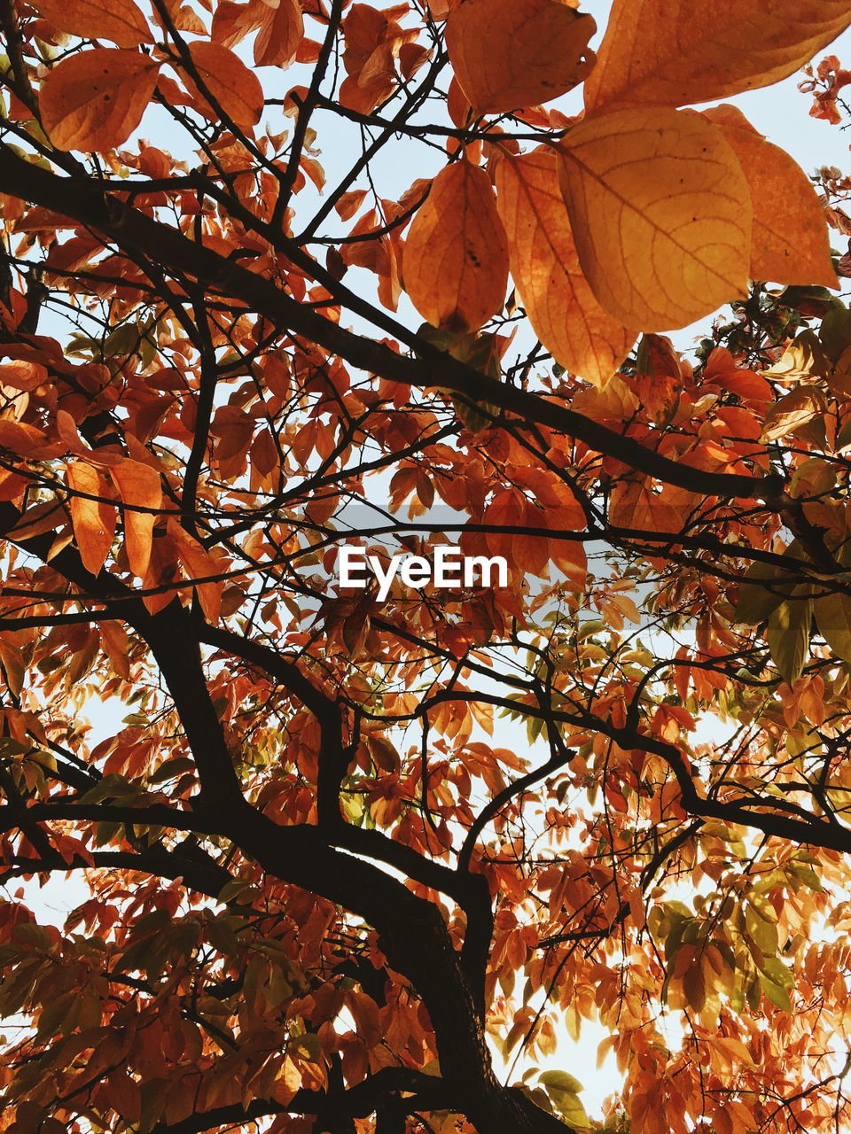 tree, branch, nature, growth, leaf, beauty in nature, low angle view, autumn, outdoors, day, no people, freshness, fragility, close-up
