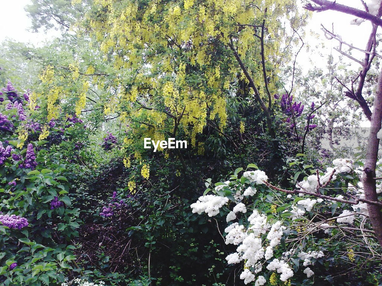 nature, growth, tree, flower, blossom, beauty in nature, spring, no people, fragility, branch, plant, day, outdoors, freshness