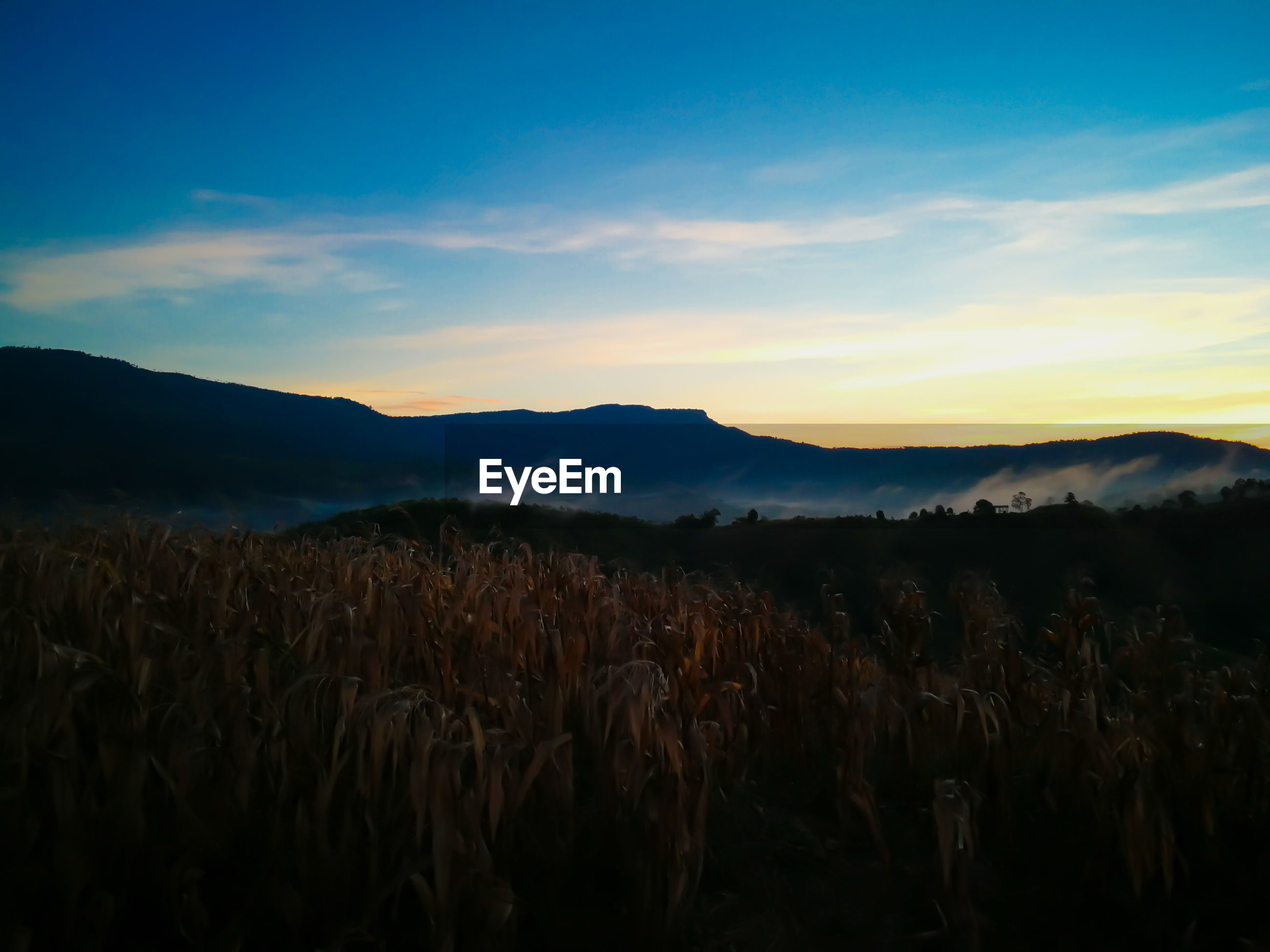 SCENIC VIEW OF FARM FIELD AGAINST SKY DURING SUNSET