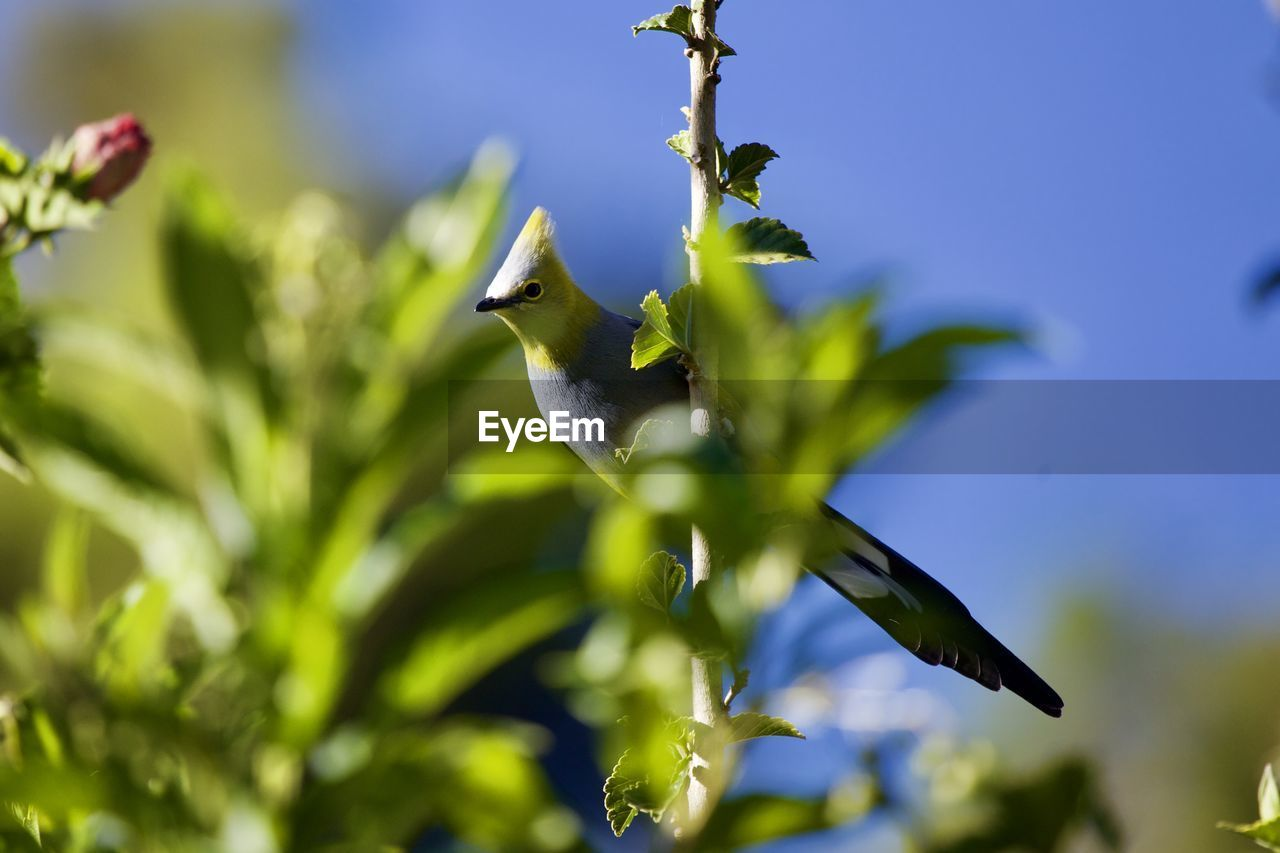 plant, bird, animals in the wild, animal themes, growth, animal wildlife, animal, vertebrate, green color, one animal, no people, beauty in nature, day, nature, selective focus, flower, flying, flowering plant, close-up, plant part, outdoors