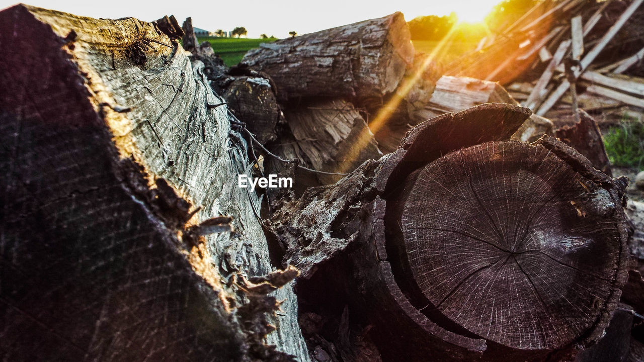 log, no people, sunlight, nature, stack, close-up, outdoors, sunset, tree, day