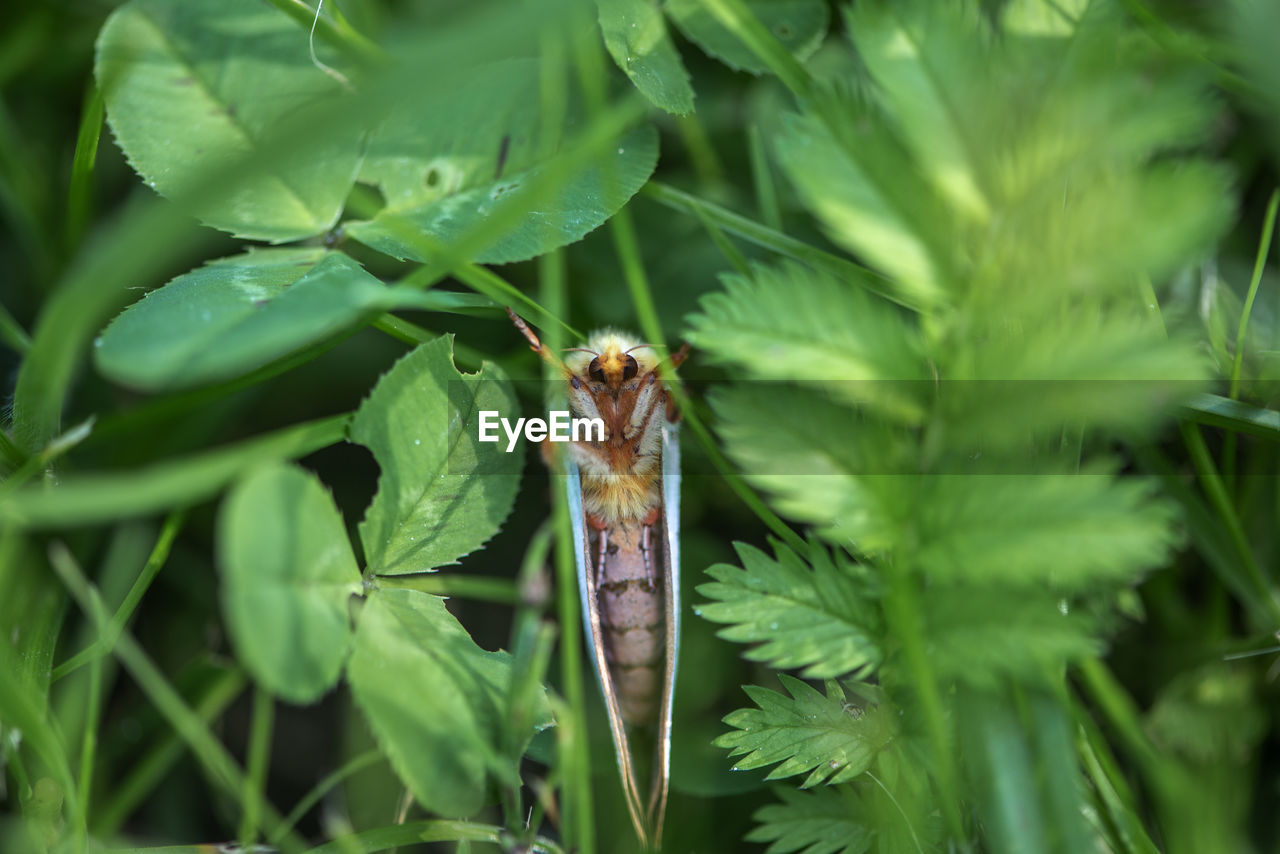 green color, animal themes, one animal, animal, plant, leaf, plant part, animals in the wild, animal wildlife, close-up, nature, growth, no people, day, insect, invertebrate, outdoors, focus on foreground, beauty in nature, selective focus
