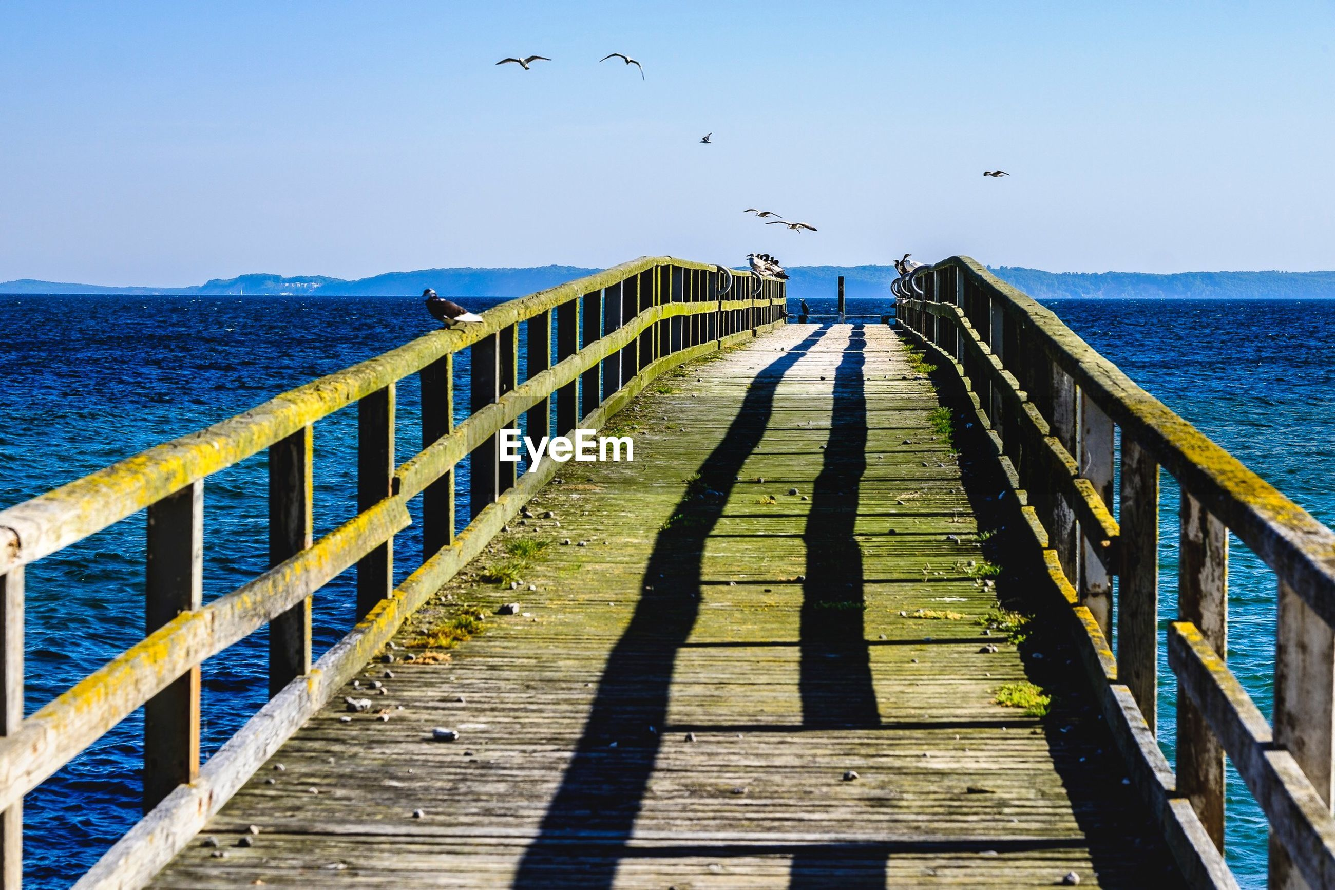 Birds flying over pier and sea