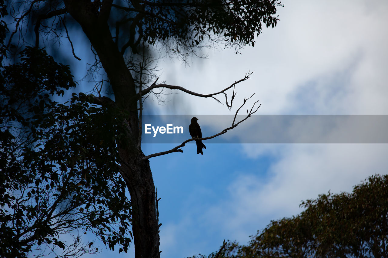tree, plant, animal wildlife, animals in the wild, nature, low angle view, one animal, branch, animal, animal themes, sky, vertebrate, trunk, cloud - sky, tree trunk, day, outdoors, growth, perching, leisure activity