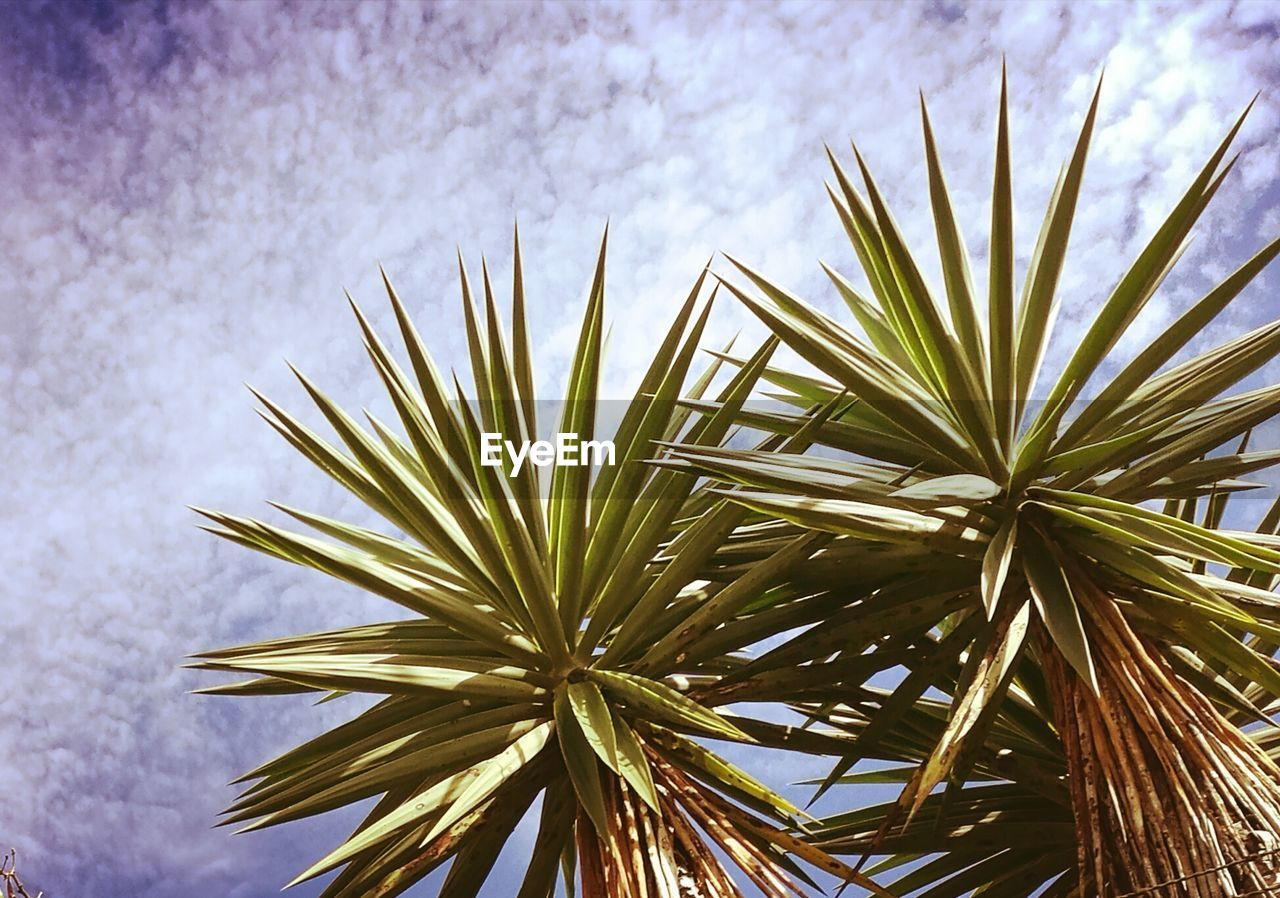 nature, growth, beauty in nature, palm tree, tree, plant, outdoors, no people, day, sky, flower, low angle view, close-up, fragility, freshness, flower head